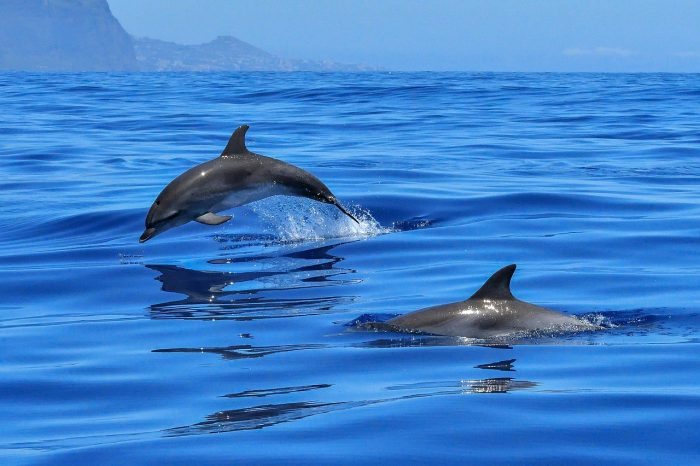 Dolphin Tour – Gulf of Chiriqui