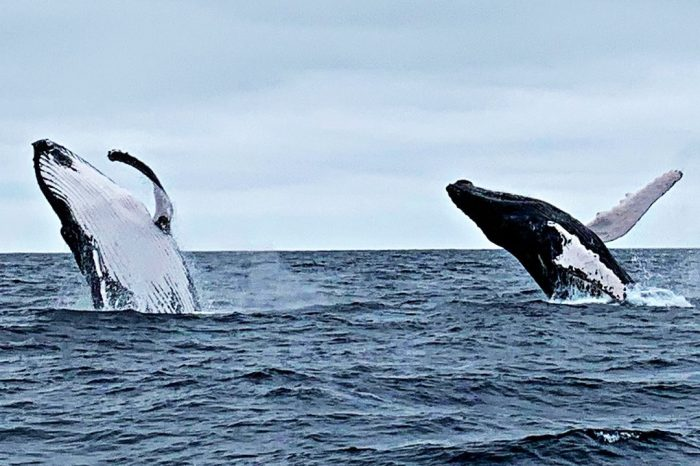Whale Watching Group Tour And Two Islands Hopping
